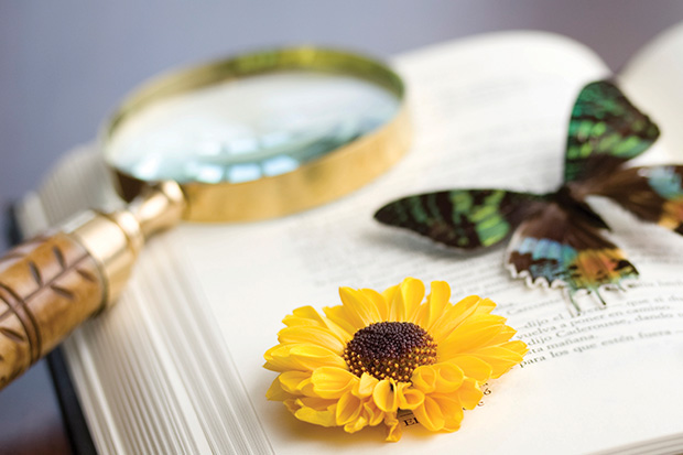 Magnifying glass, yellow daisy and butterfly on top of open book