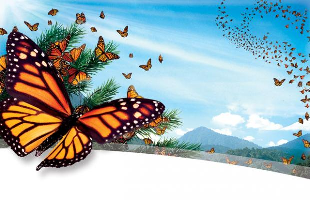 A lot butterflies in air against a mountain setting.